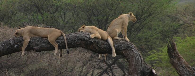 agence safari tanzanie